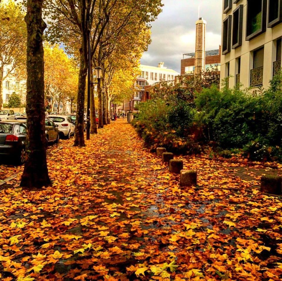 L'automne dans le quartier @Jp Couard