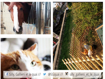 Cheval, chat, poule... Le salon d'agriculture du quartier @Silly, Gallieni et le quai