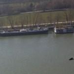 Un Dauphin dans la Seine à Boulogne-Billancourt : cette photo qui a été prise va vous étonner !
