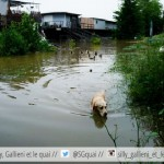 Crue de la Seine à Boulogne-Billancourt : 10 photos que vous n'auriez jamais pensé voir dans le quartier !