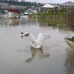 PHOTOS. Crue de la Seine : les images insolites